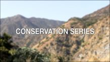 Conservation Series