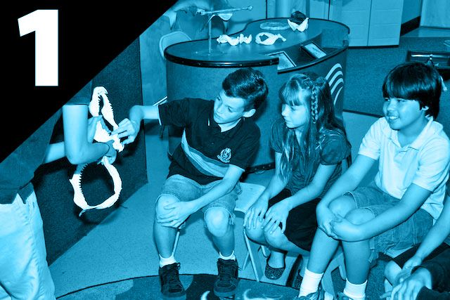 Kids exploring shark jaws with educator - lightbox