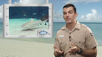 Educator on a beach next to an image of a shark
