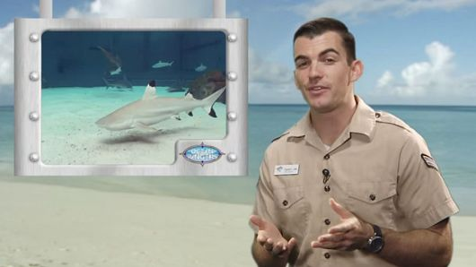 Educator on a beach next to an image of a shark - popup