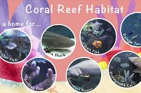 Collage of ocean habitats