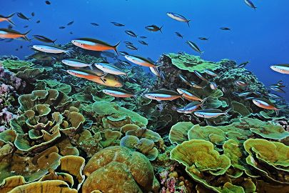 Coral reef featuring fish swimming by Keith Ellenbogen