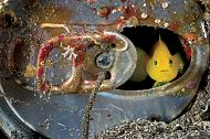 Aquarium Hosts Exhibit by National Geographic Photographer