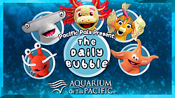 The Daily Bubble thumbnail