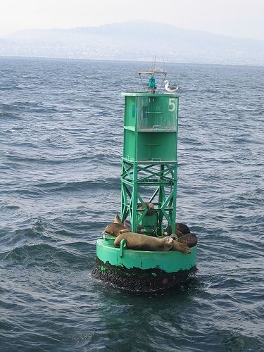 Sea lions resting on a green buoy on the ocean