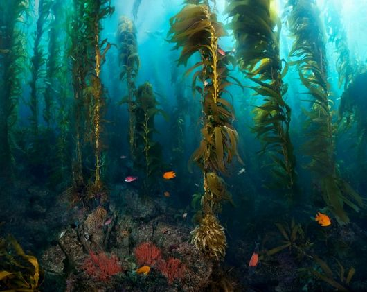 Kelp Forest Photographer to Present Lecture and Exhibit at the Aquarium