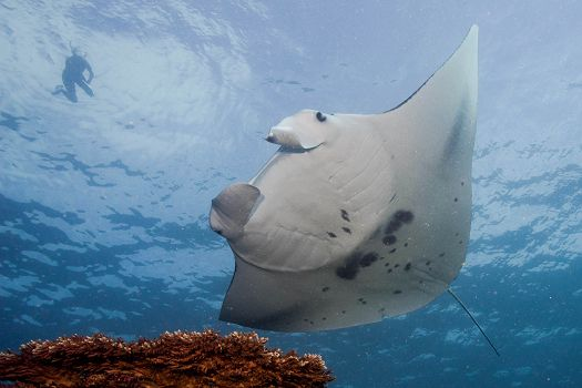 Journey to the Island of Yap: Stone Money, Massive Manta Rays, and More