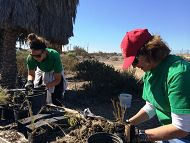 Aquarium Hosts Monthly Habitat Restoration at Los Cerritos Wetlands