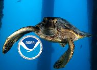 Aquarium Hosts NOAA Day on Saturday, November 12, 2016