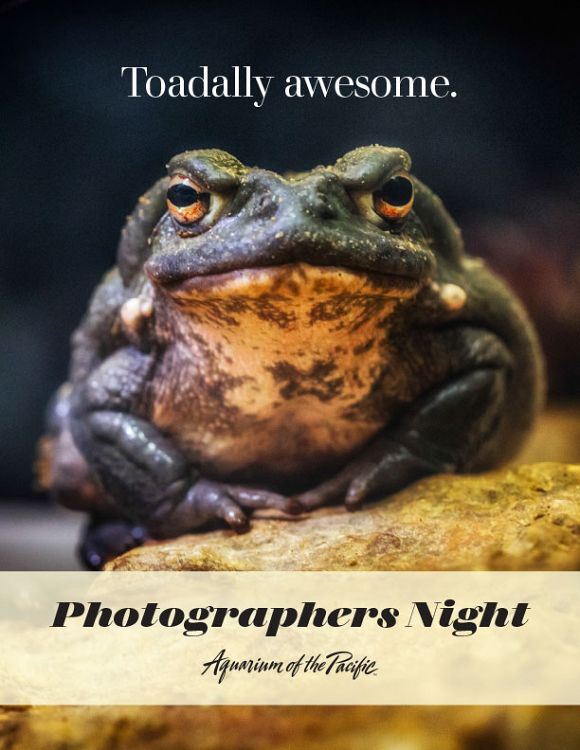 Toadally awesome toad. - lightbox