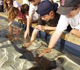 Kids touching sharks in Shark Lagoon