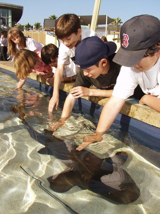 Kids touching sharks in Shark Lagoon - popup