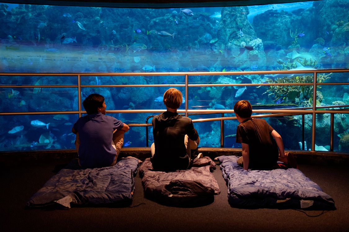 Sleepover in front of Tropical Reef - lightbox