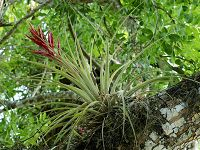 Tillandsia Air Plants: Low-Water Plants for the 21st Century