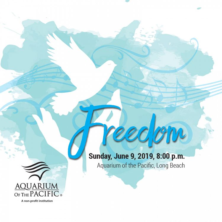 Freedom concert graphic blue background with white silhouettes of two hands releasing a dove - lightbox