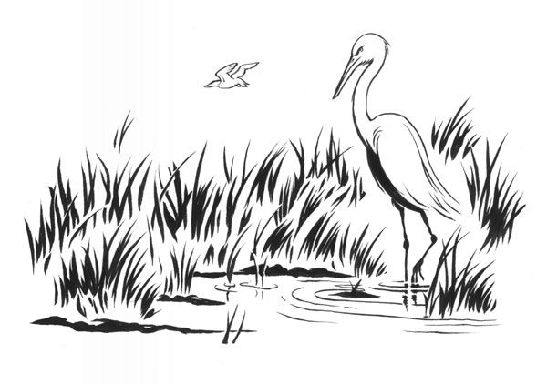 Wetlands illustration with shorebirds and tall grass - lightbox
