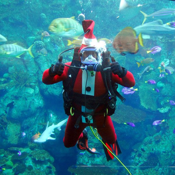 Holiday Santa diver in Tropical Reef exhibit - lightbox