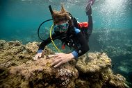 Project SECORE and Guam's Threatened Coral Reefs