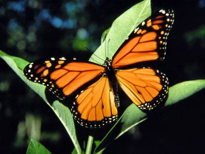 Amazing Butterflies: Nature's Gift to Us