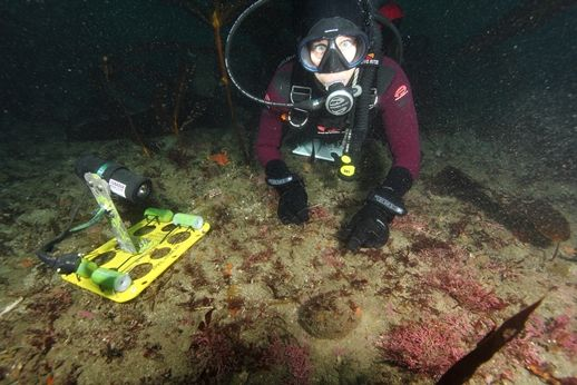 Status of White and Pinto Abalone in Southern California