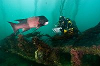 History at our Doorstep: Images of California Submerged Shipwrecks