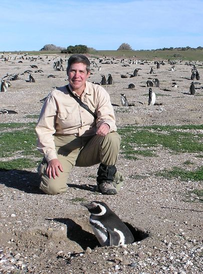 Magellanic Penguins: Wildlife Spectacles and Long-Term Studies