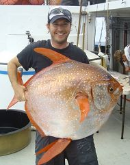 Meet the Opah, the First Warm-Blooded Fish