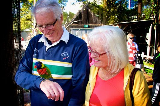 Senior couple with lorikeet - popup
