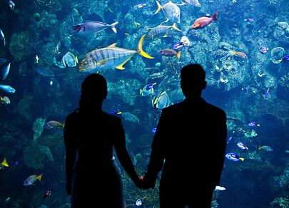 Couple holding hands silhouetted against Tropical reef exhibit