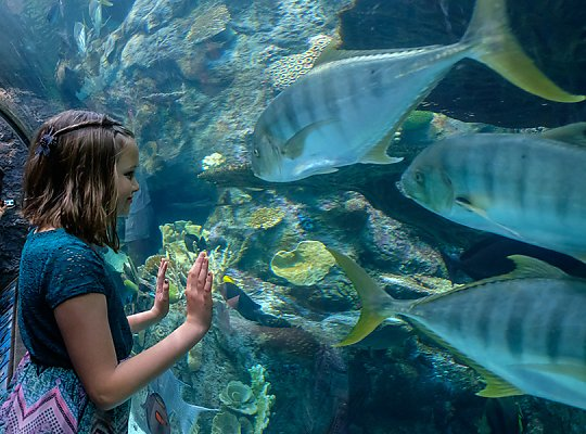 Girl looks at golden trevally fish in tunnel - slideshow