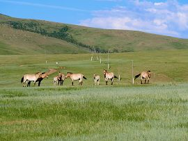 Land of the Blue Sky: How Mongolia's Conservation Efforts Can Inform Ocean Conservation