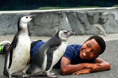 Penguins and boy