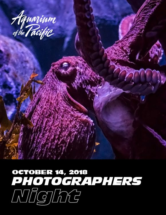Photographers Night 2018 poster with giant Pacific octopus - lightbox