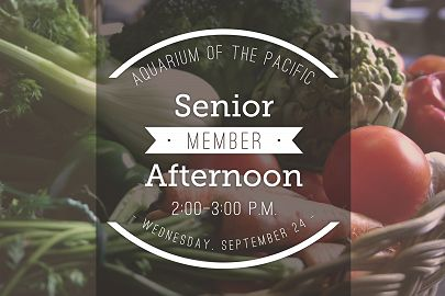 Senior Member Afternoon