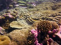 Super Corals: What They Are and Why They Are Important