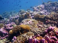 Links to Where the Living Reefs Are: A Quest to Find the World's Most Resilient Corals