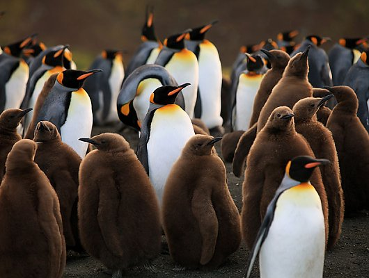 Penguins 4D