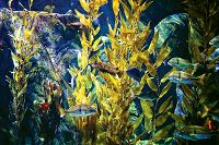 Links to Kelp Forests & Conservation