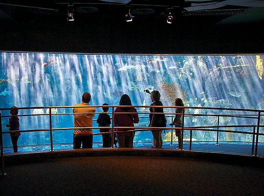 large exhibit window with people in front - slideshow