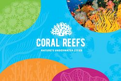 Coral Reefs: Nature's Underwater Cities Banner