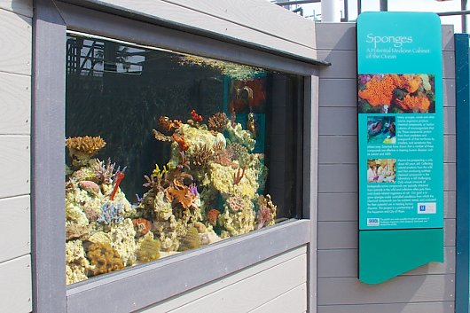 Coral and Sponge Exhibit