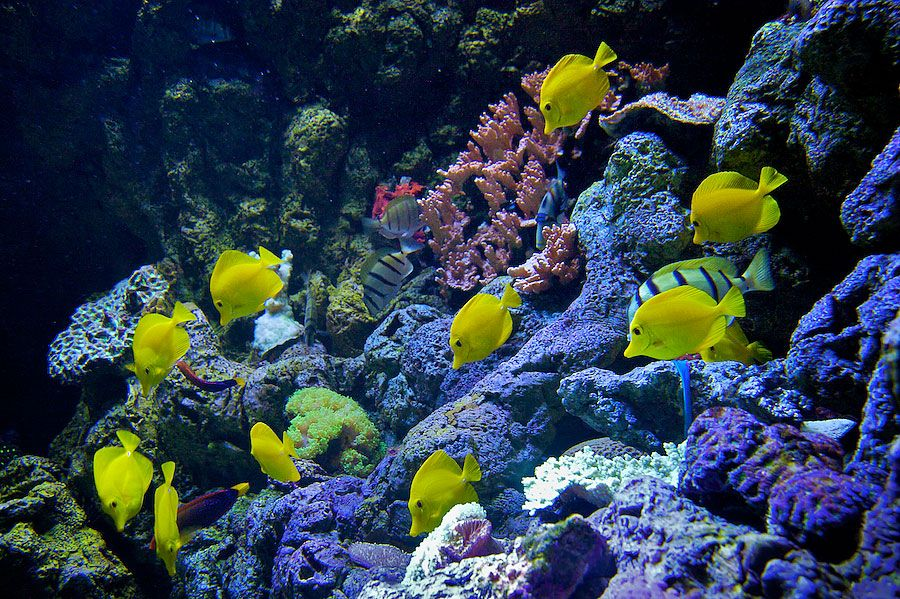 Hawaiian Reef Exhibit - lightbox