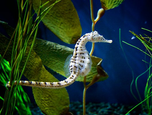Seahorses and Seadragons