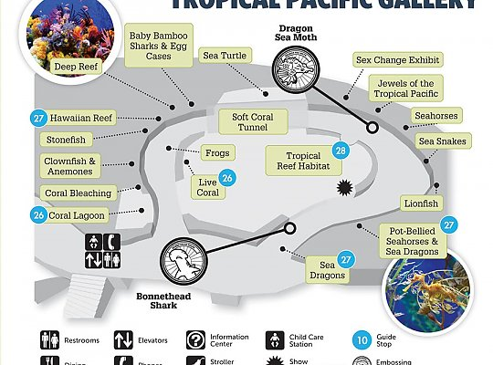 Map of Tropical Pacific Gallery - slideshow