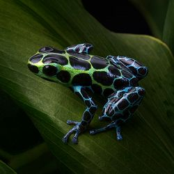 amphibians 101 - Images Of Frogs