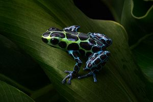 aquarium of the pacific exhibits frogs dazzling and disappearing