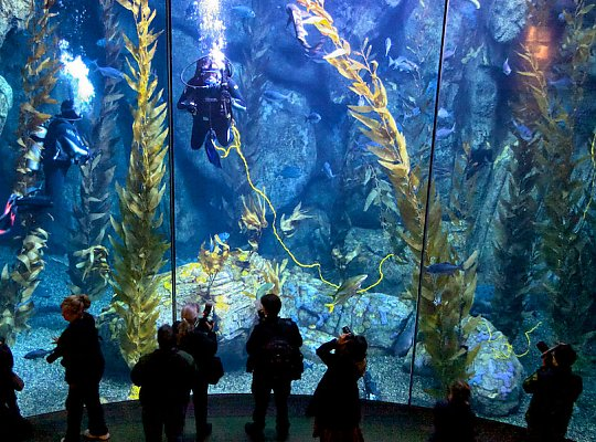 Blue Cavern tank with people in front - slideshow