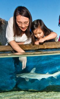 Bonnethead Shark and Cownose Ray Touch Pool