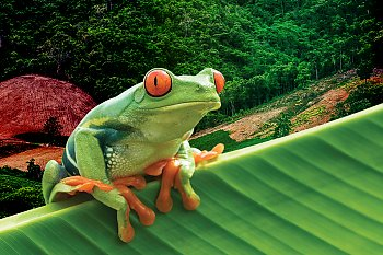 frog on leaf - popup