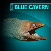I Completed the Blue Cavern Mission at the Aquarium of the Pacific